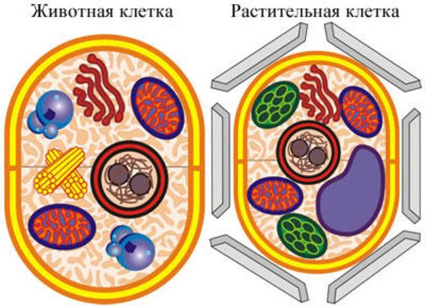 Животная клетка своими руками 910